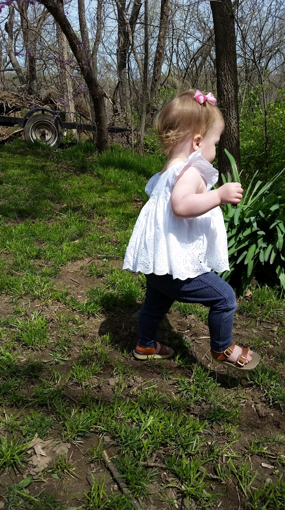 "She could be hunting eggs here for all you know. Sidenote, I totally get where the term ""Toddler"" comes from now. Watching her toddle around is the best."