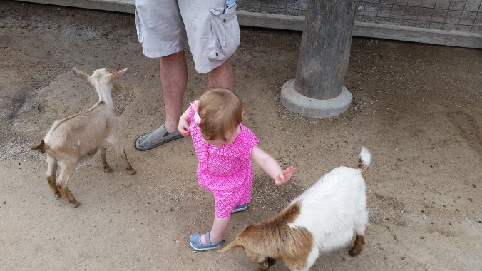 She was more outgoing with the animals than I thought she would be. She was still hesitant at times, but she at least gave it a go.